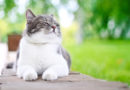 4 Summer Dangers for Cats