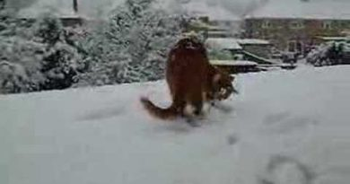 Freddie Mercury's Morning in the Snow : My cat playing!