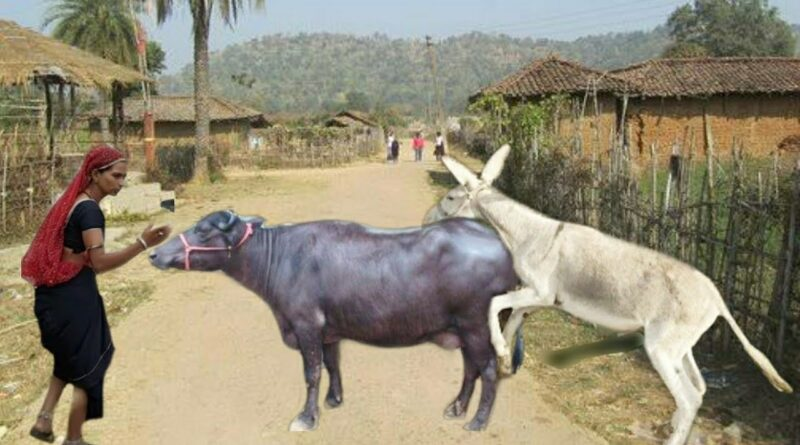 Excellent Animal Meeting I Buffalo & Horse Meeting, Buffalo & Zebra Meeting Donkey Meeting Village t