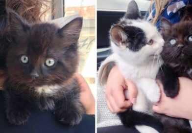 Stray Kitten Finds Friend that He Needed, and a Dream Home for Both