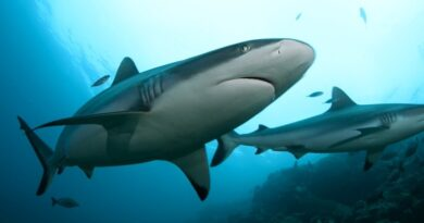 Sharks Might Be Making Friends With Other Sharks After All